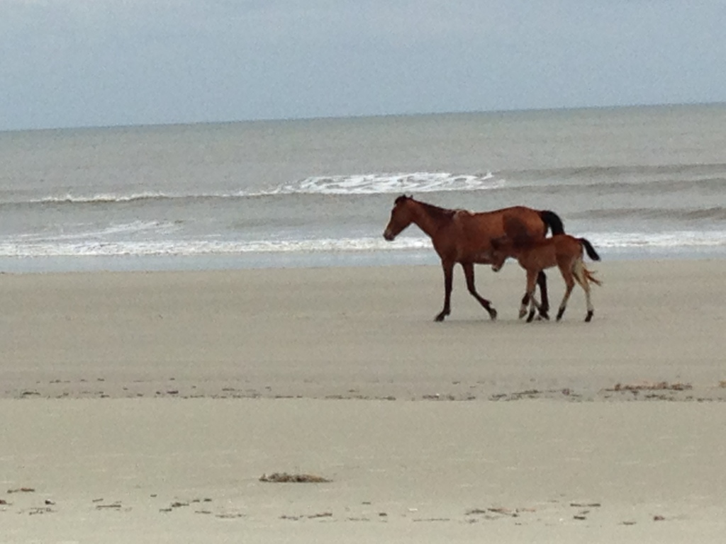 Travel inspired by children's book Misty of Chincoteague